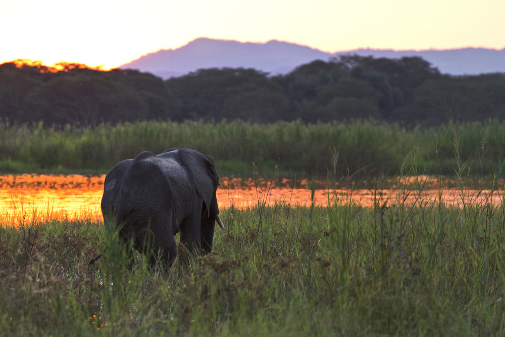 Photo by Responsible Safari Company, in partnership with We Are Travel Girls
