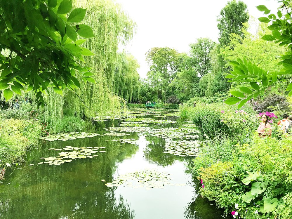 Water Lilly pond in June