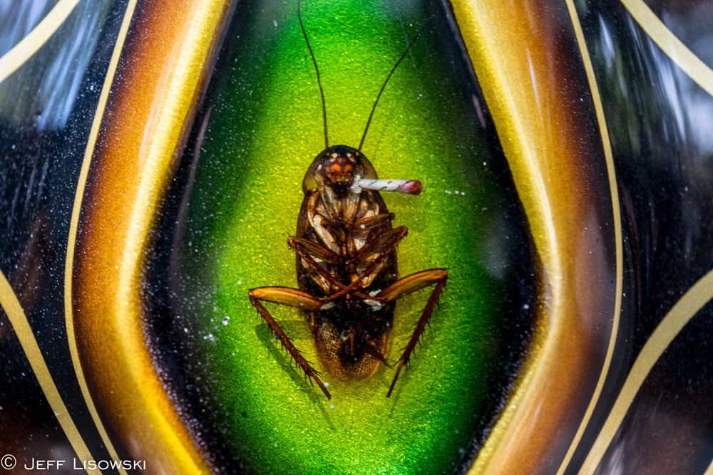 VNM Horsebites Roach Smoking a Roach
