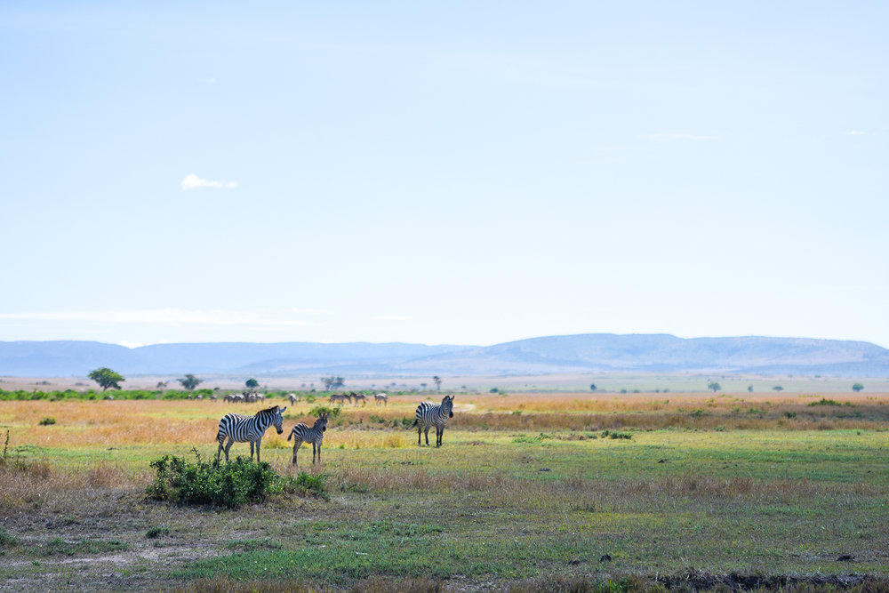 Masai Mara National Reserve.