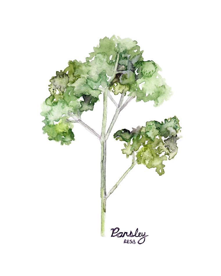 parsley-web.png