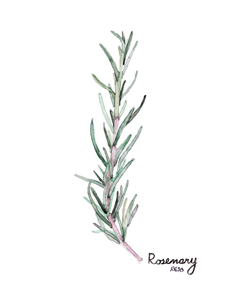 rosemaryweb-.png