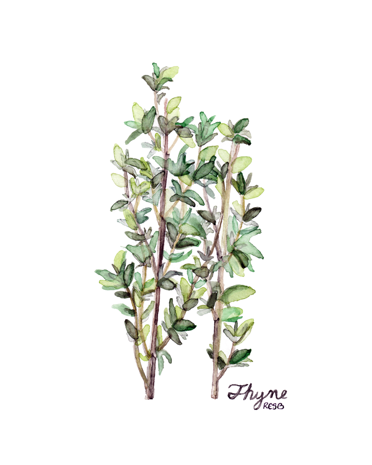 thyme-web.png