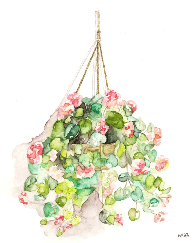 hanging-basket-web.png