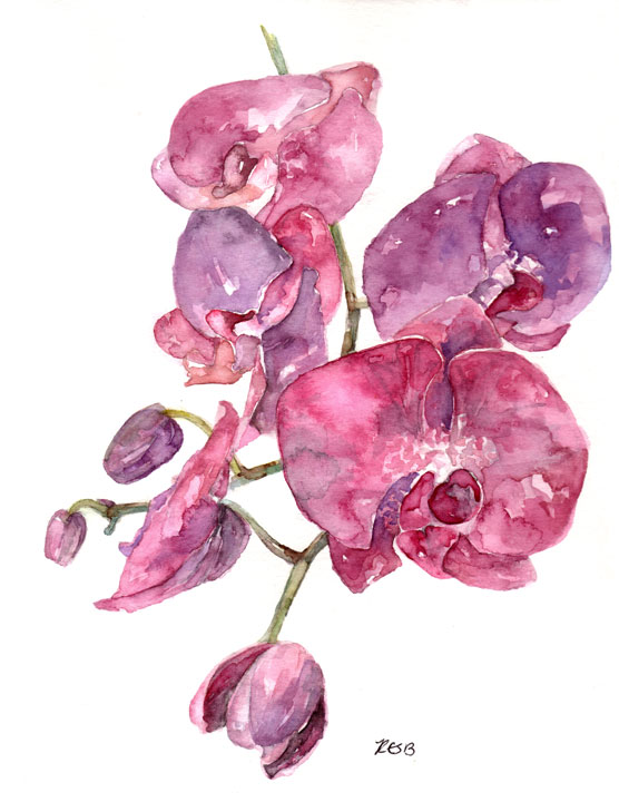 pink-orchid-web.png