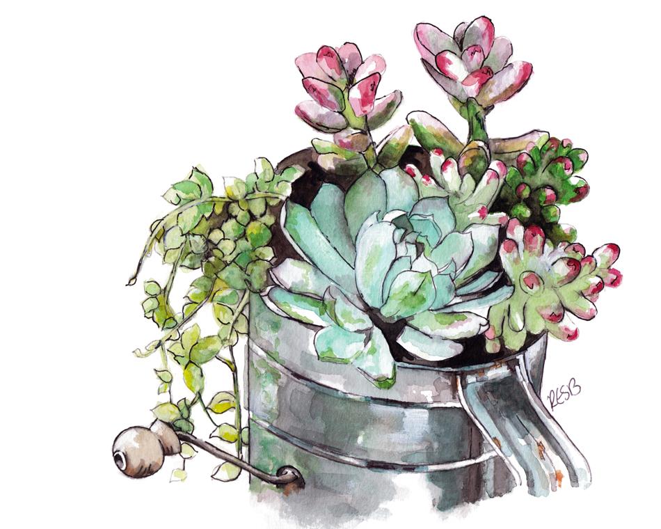 Succulents-web.png