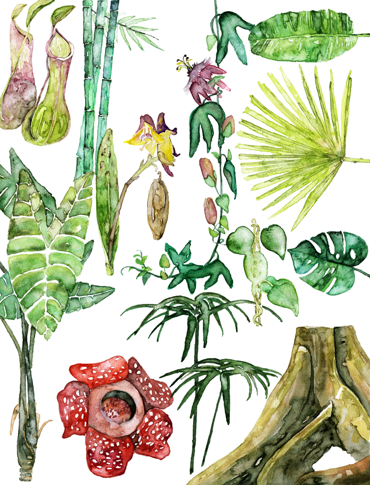 tropical-foliage-web.png