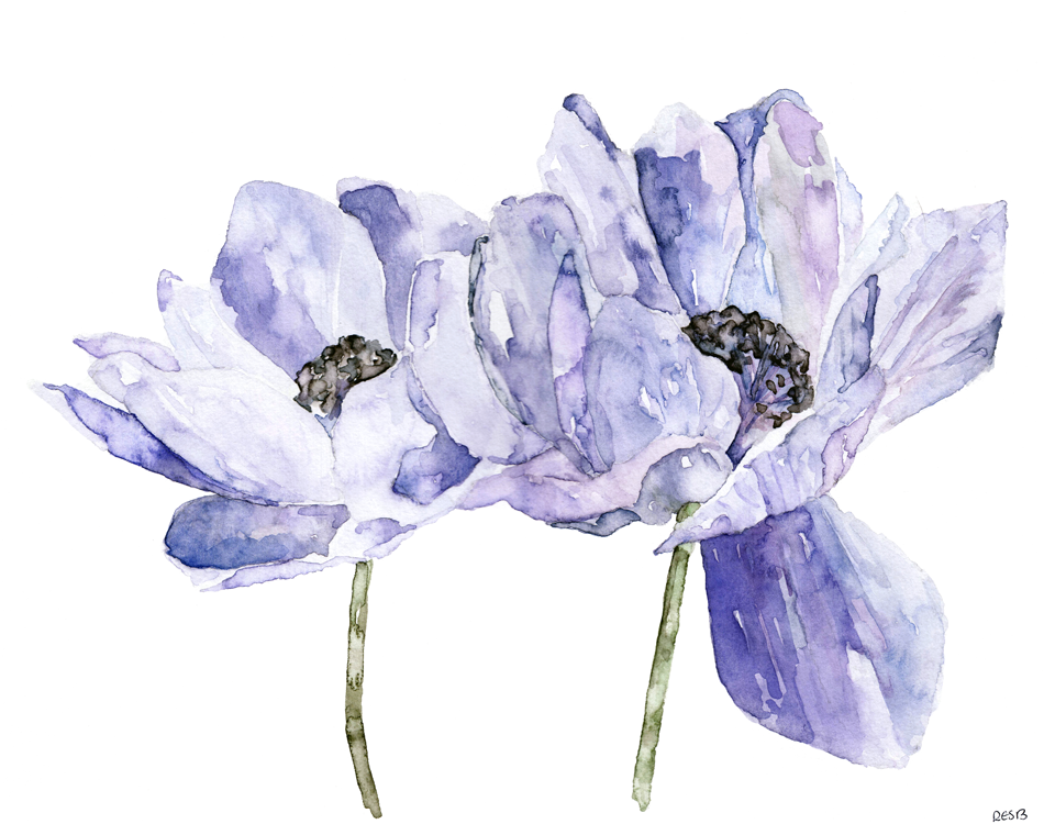 blue-anemone-web.png