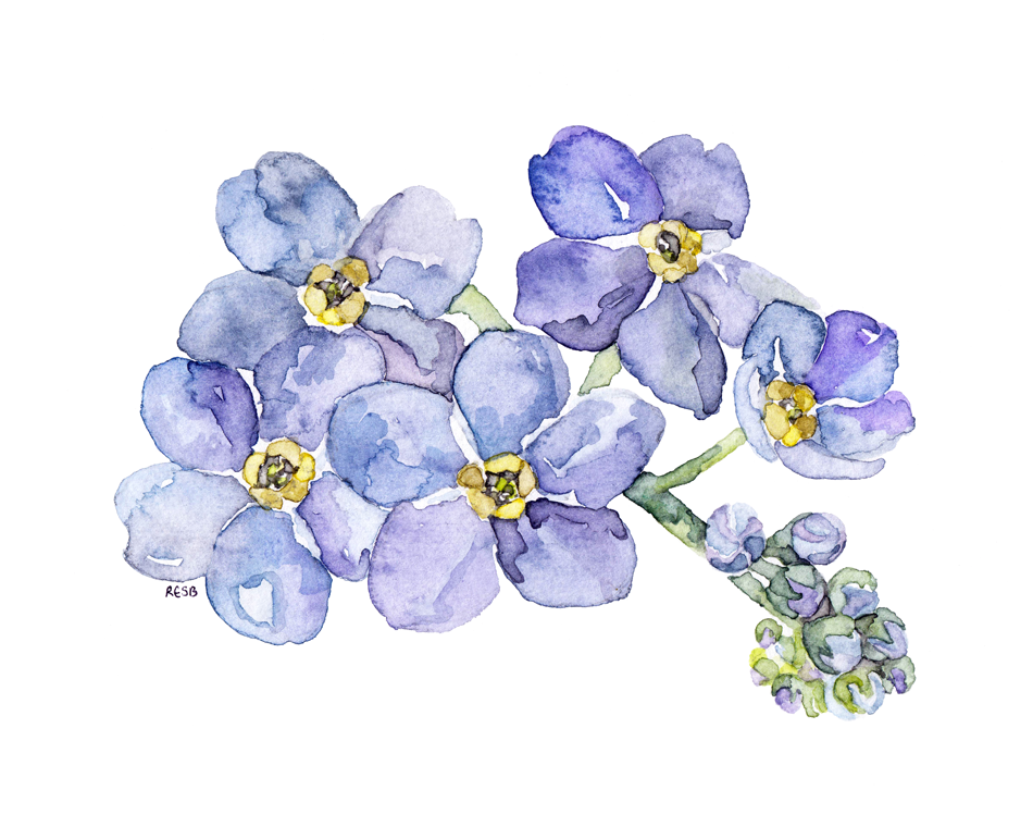forget-me-nots-web.png