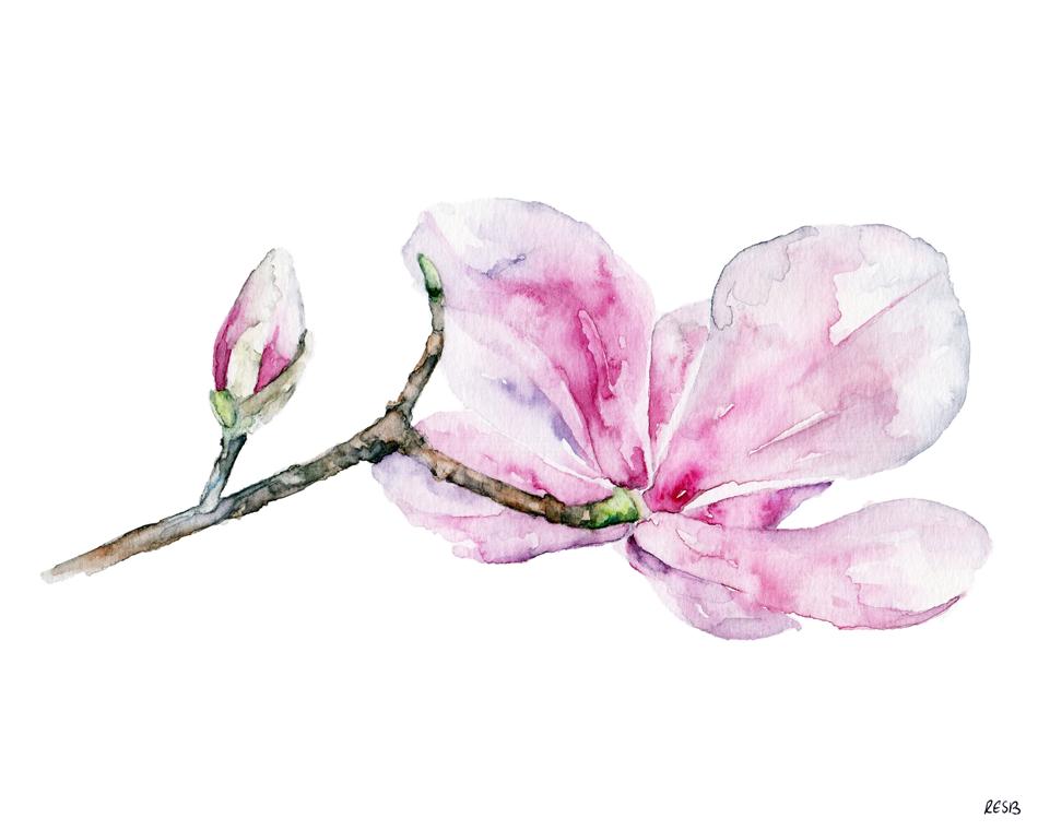 Magnolia-2-web.png