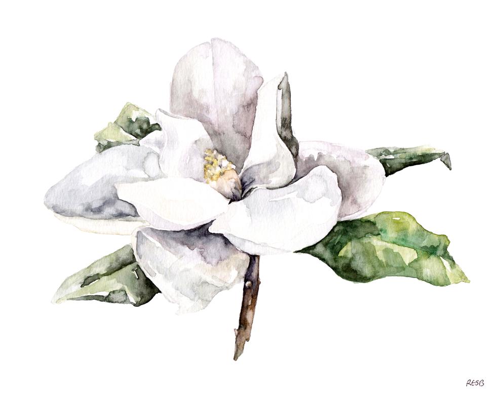 magnolia4-web.png