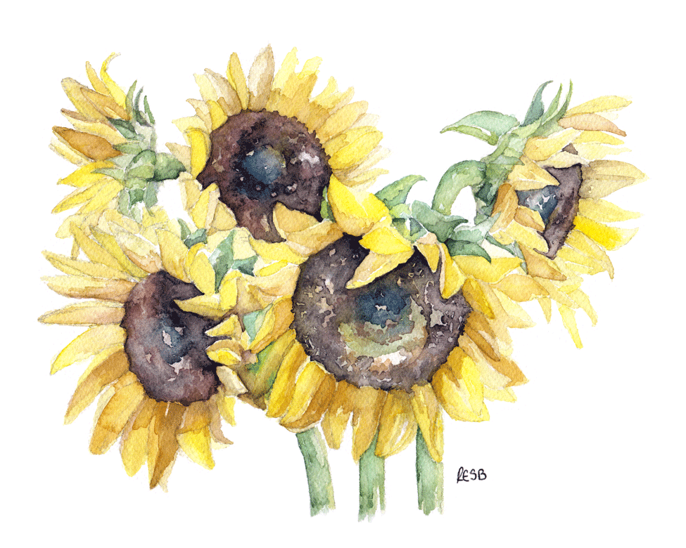 picked-sunflowers-web.png