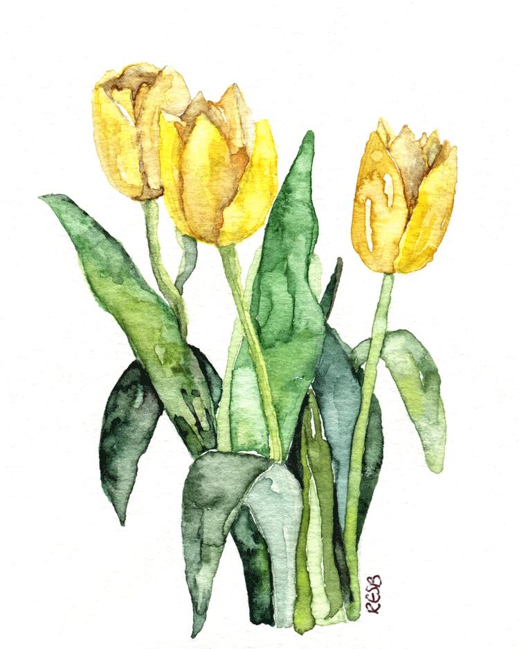 yellow-tulip-web.png
