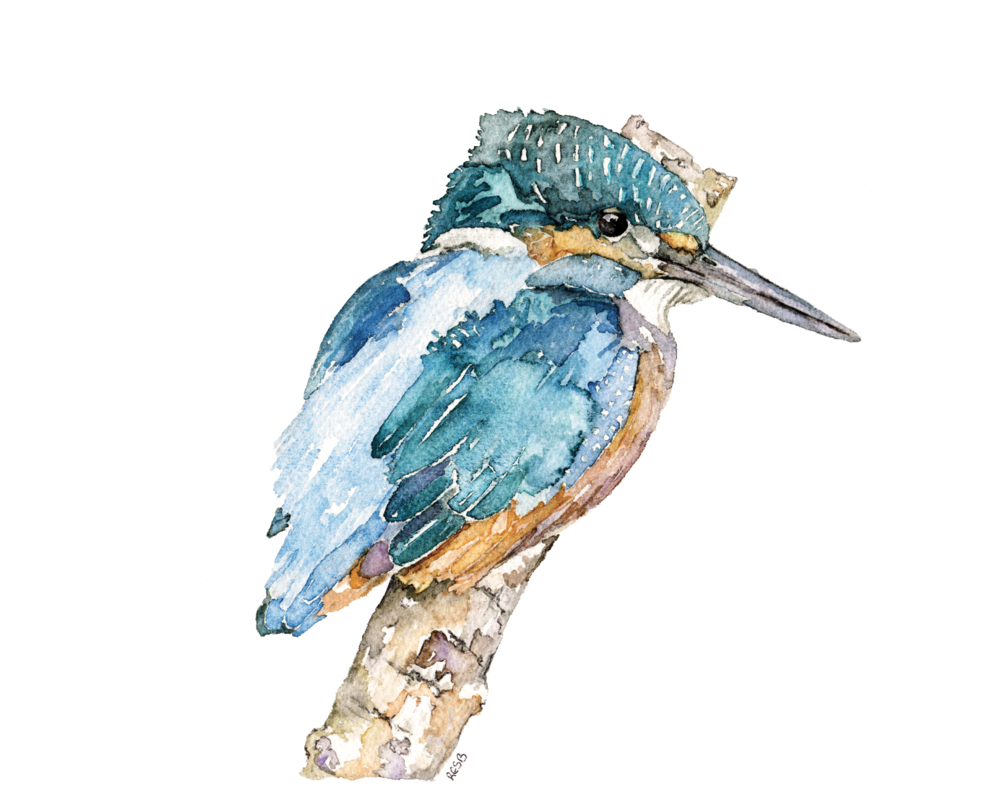 https://www.etsy.com/listing/206438261/kingfisher-painting-a-print-from-my?ref=shop_home_active_5