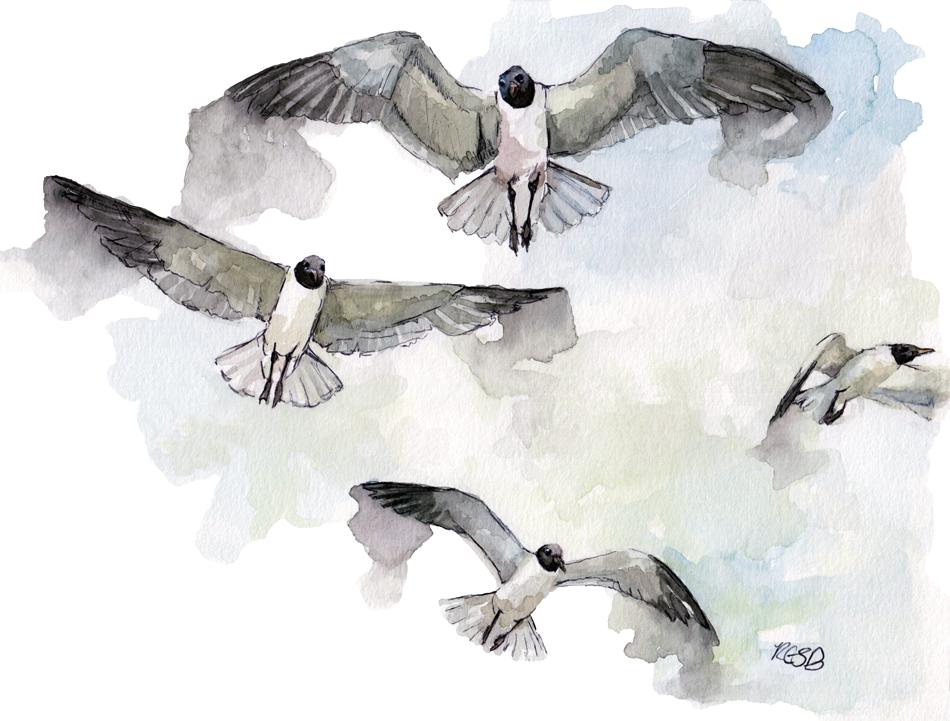 Seagulls-web.png