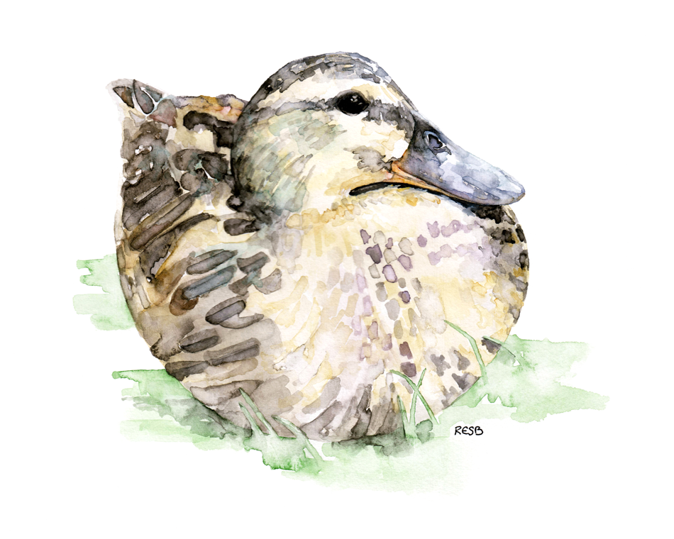 https://www.etsy.com/listing/191024227/duck-painting-print-from-original?ref=shop_home_active_6