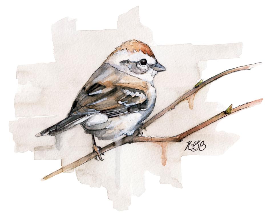 Sparrow-web.png