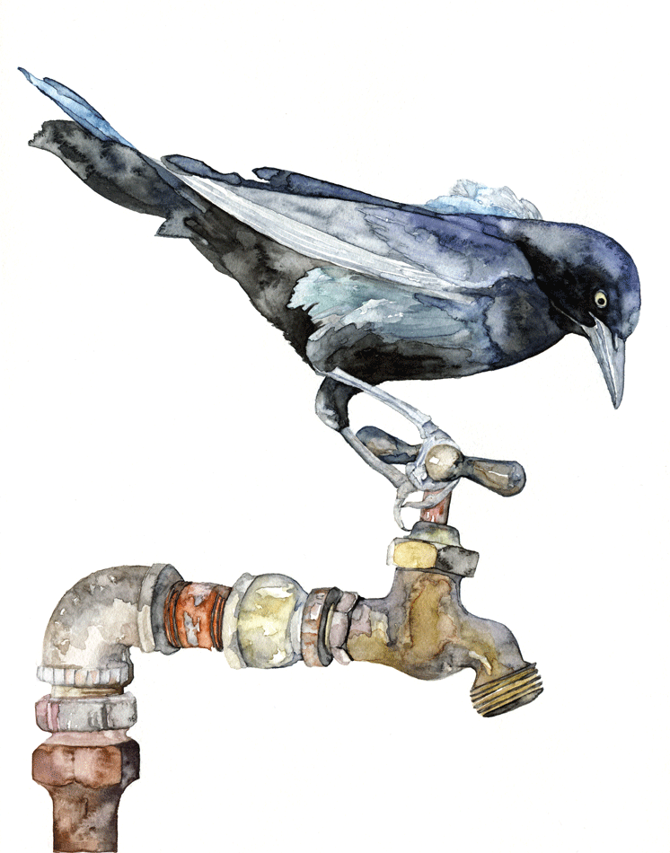 the-thirsty-bird-web.png