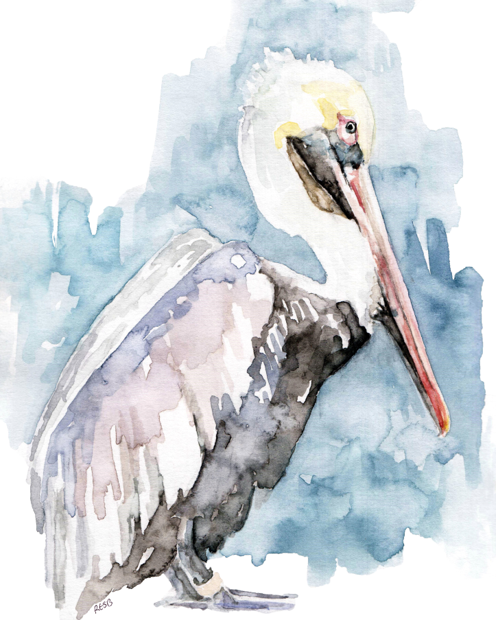 https://www.etsy.com/listing/197153612/pelican-painting-print-from-original?ref=shop_home_active_12