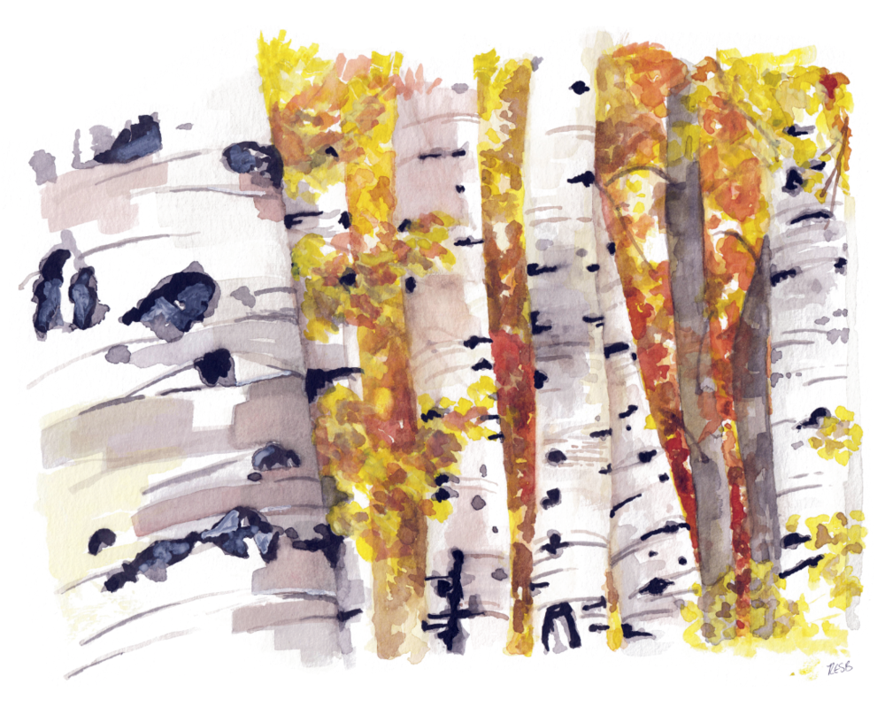 birch trees web.png