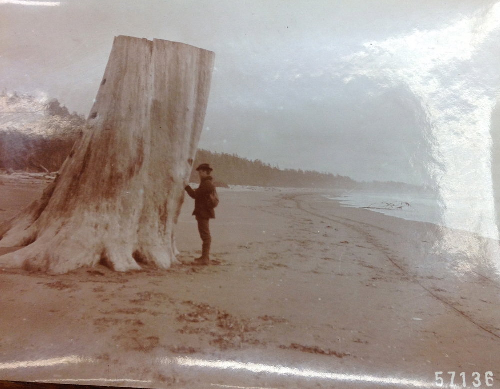 """Ranger Franklin Reed, Coast of Washington Near Quinalt River.""  From the narrative of H.J. Tompkins. Old Timers Collection, Gifford Pinchot Collection. Library of Congress Manuscript Division."