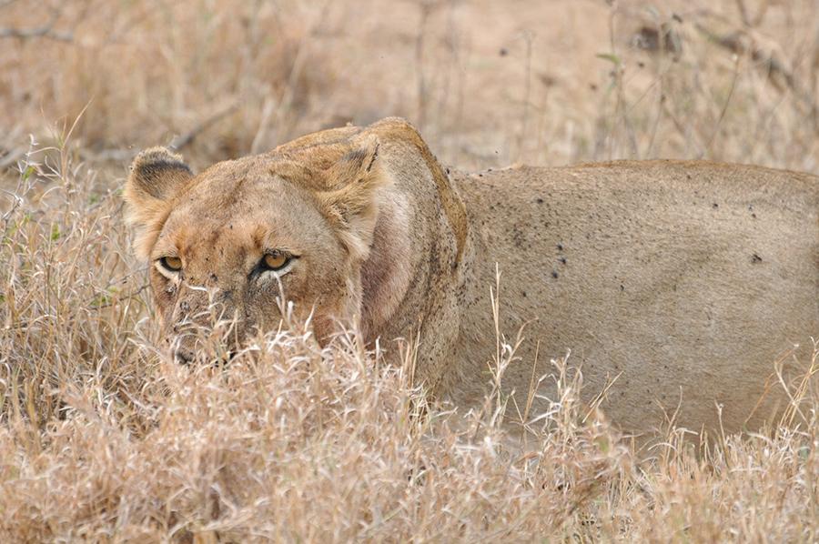 SAfrica_002.jpg