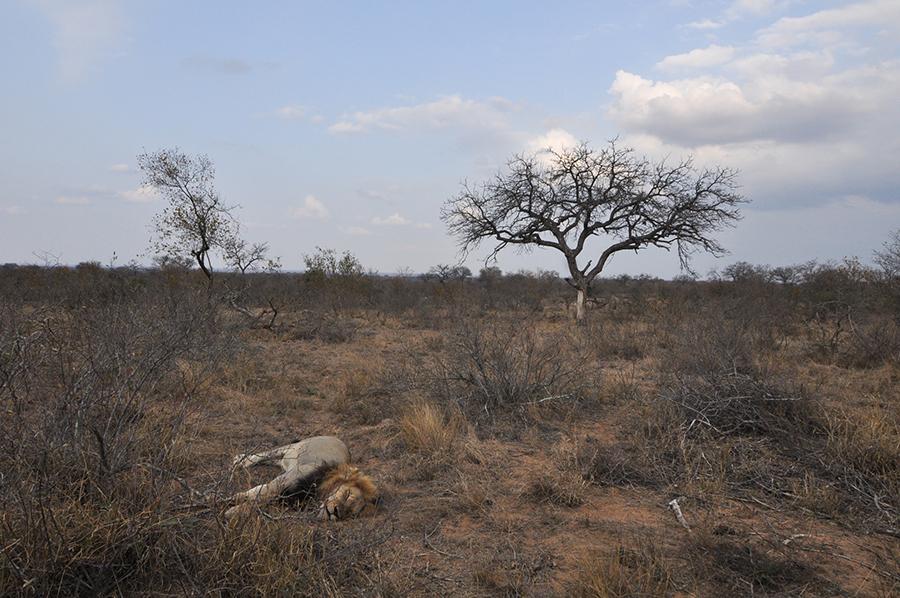 SAfrica_005.jpg