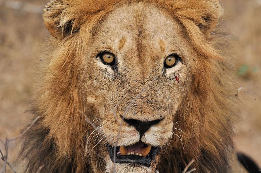 SAfrica_006.jpg