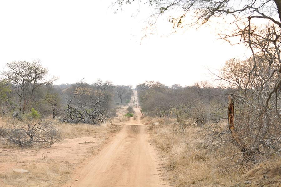 SAfrica_010.jpg