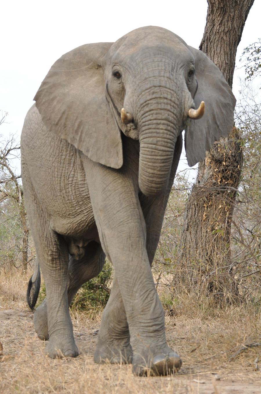 SAfrica_012.jpg