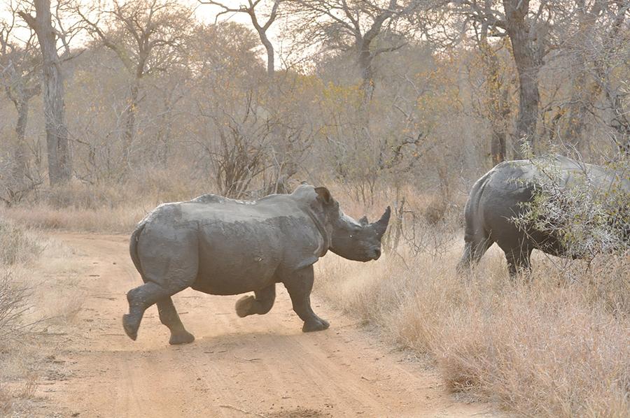 SAfrica_014.jpg