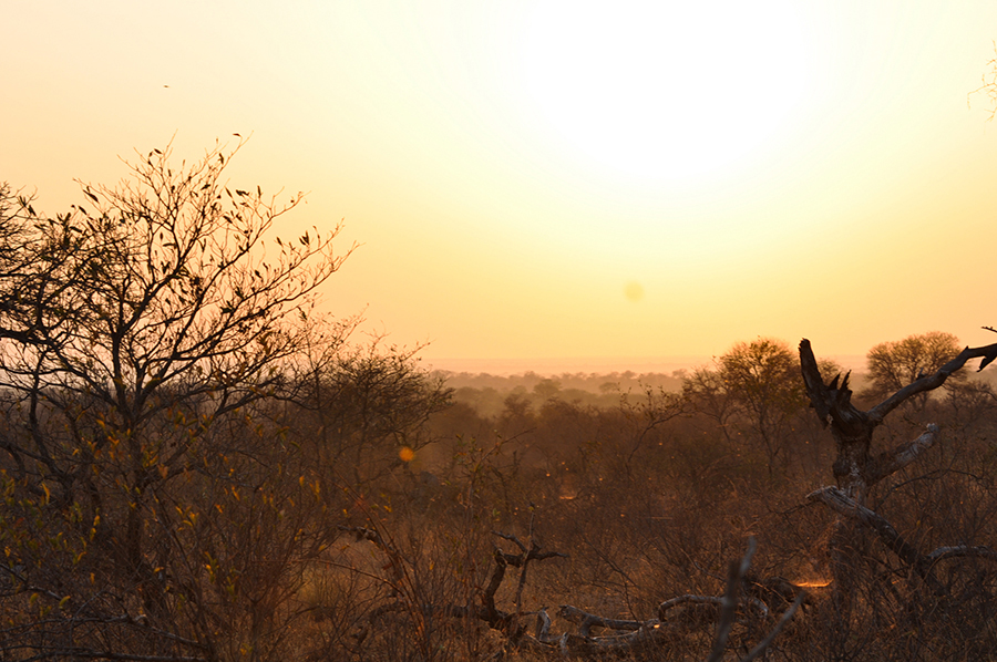 SAfrica_018.jpg