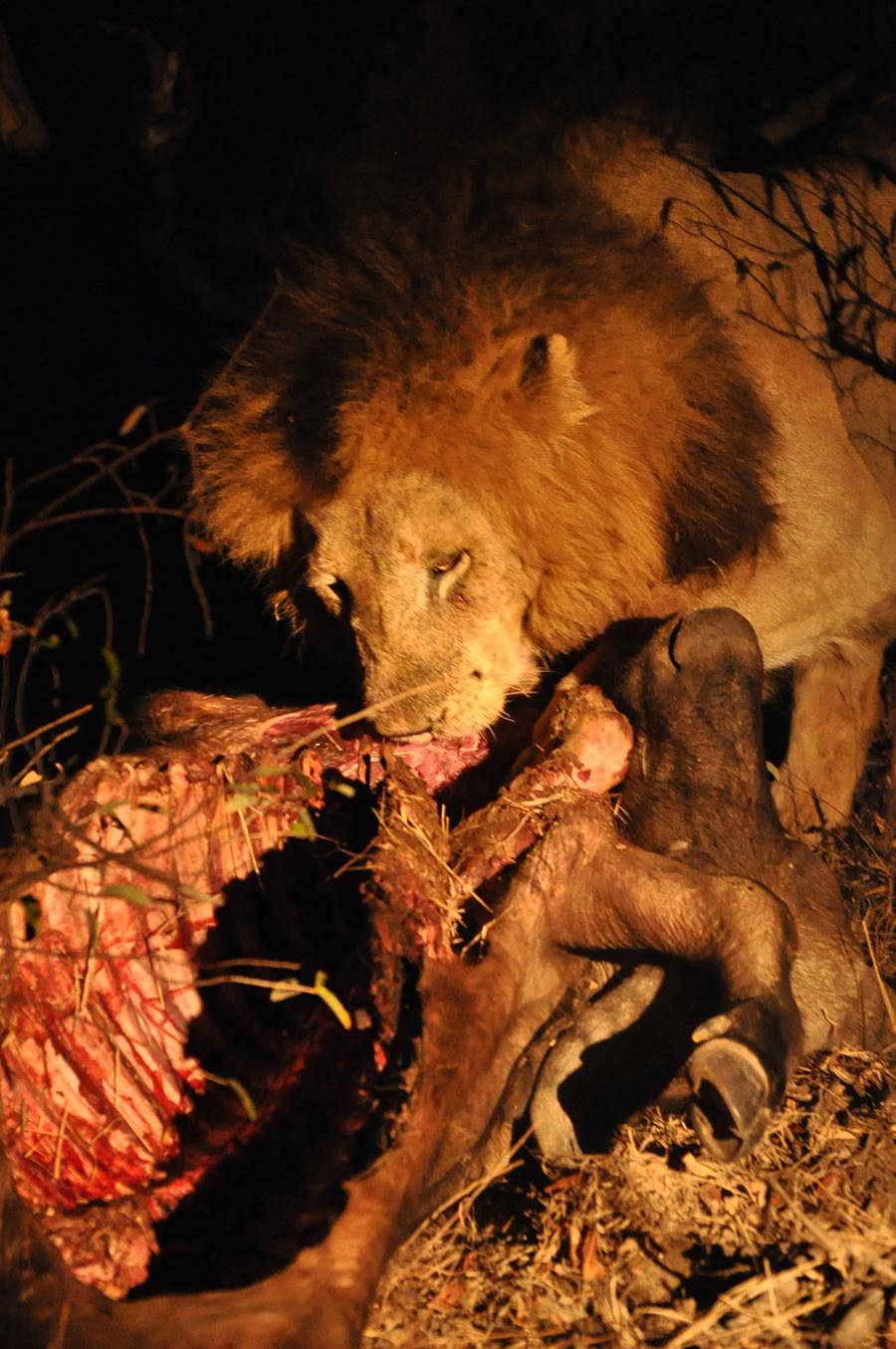 SAfrica_017.jpg