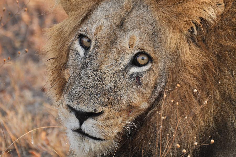 SAfrica_020.jpg