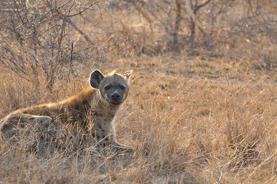 SAfrica_025.jpg