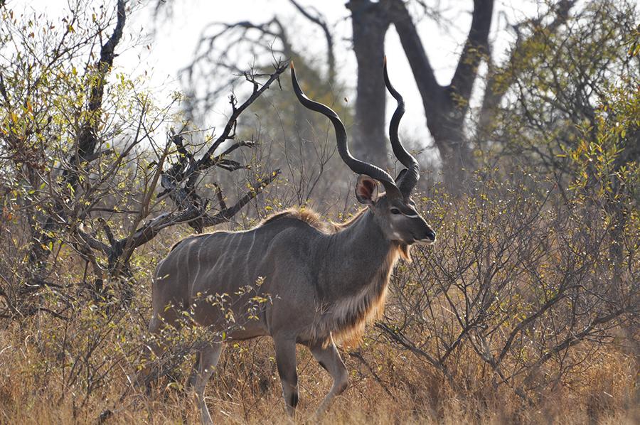 SAfrica_030.jpg
