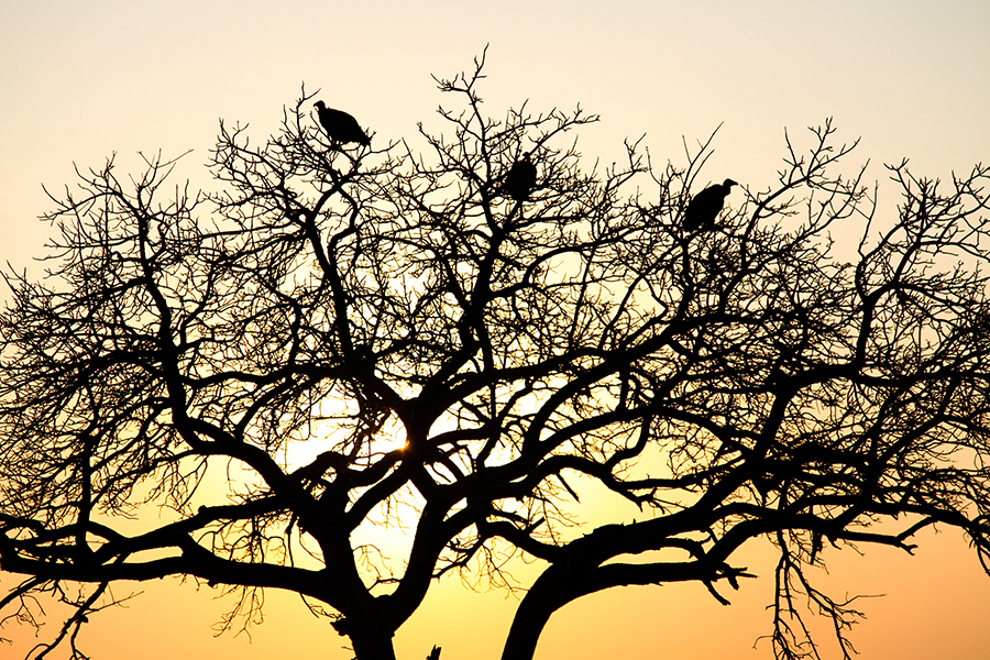 SAfrica_040.jpg
