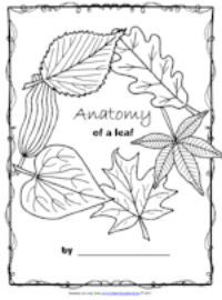 Anatomy of a Leaf.png