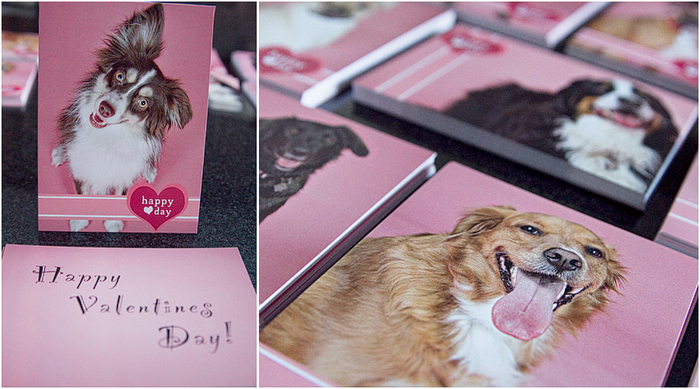 doggie valentines day cards