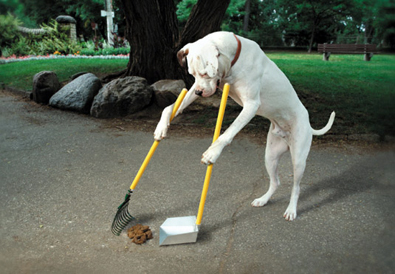dog pooper scooper