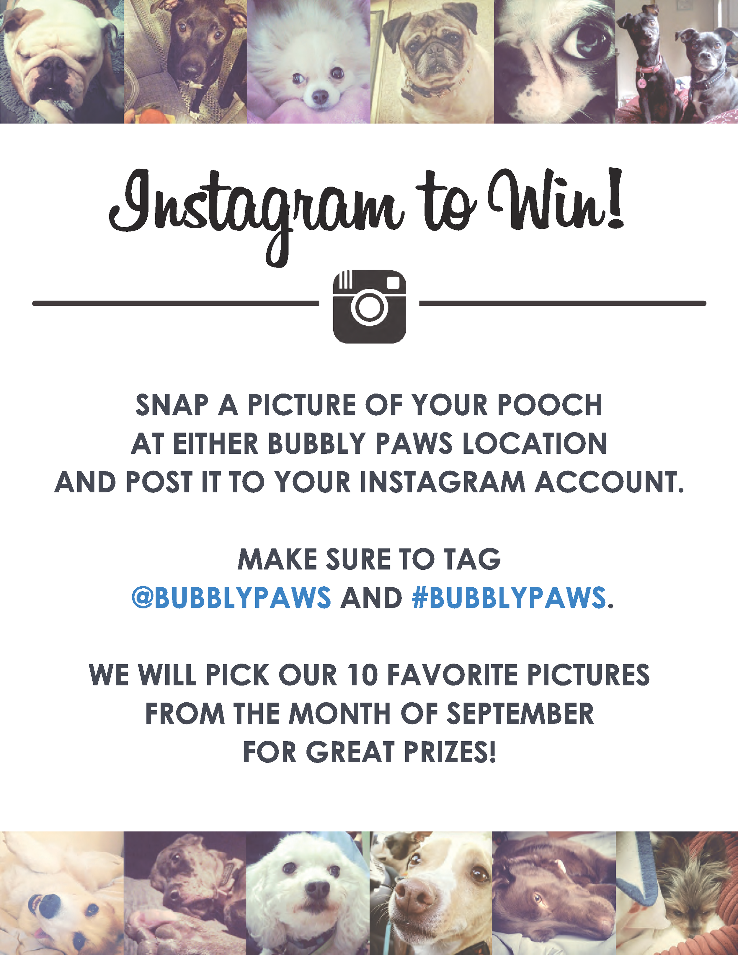 Bubbly Paws Dog Wash on Instagram