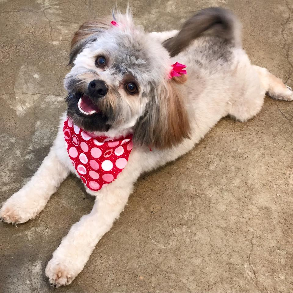 Like bows and bandannas? Let us know so we can make sure your pup goes home with them!