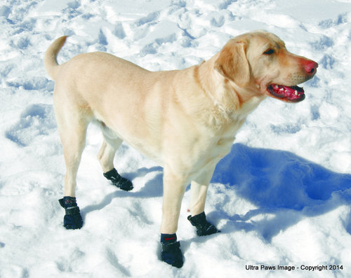 News summary bubbly paws dog wash and grooming twin cities mn kare 11 cold weather tips solutioingenieria Images