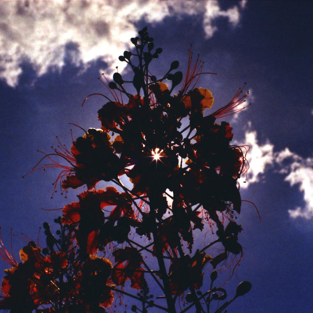 colour-flower for slipcover box.jpg