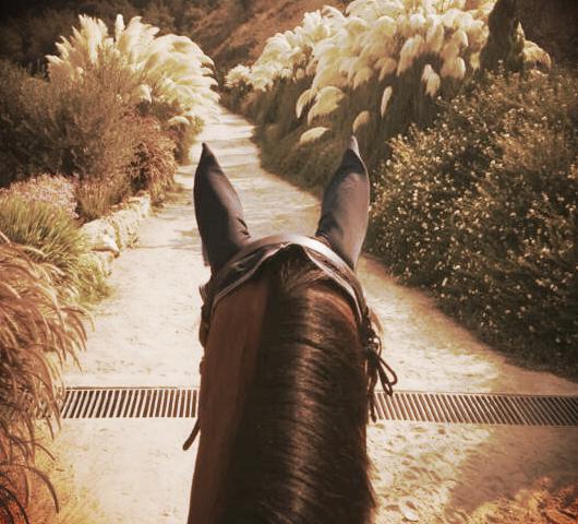 HORSE RIDING DBAYEH