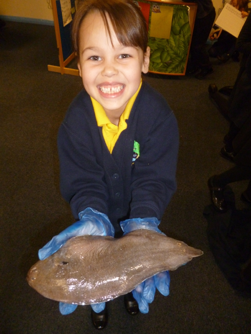At the Krispies Kids School Workshops we encourage the Kids to touch the fish.