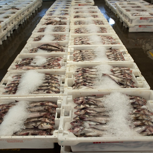 Fish markets form part of the Chain of Custody