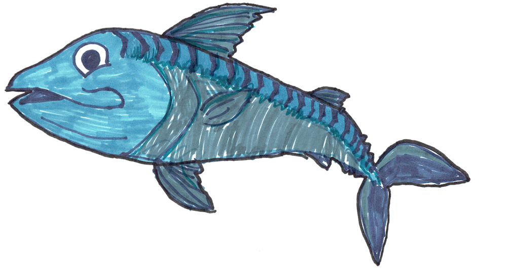 Meet Mickey the Mackerel draw by Dillon Price and the winner of our first ever Kids Colouring Competition held in 2017.