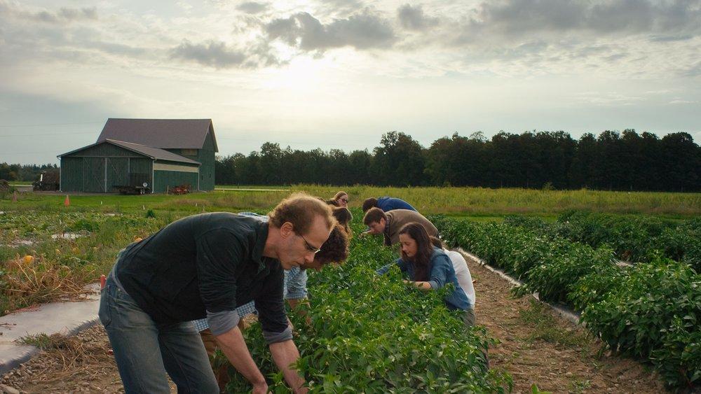 sustainability-farm.jpeg