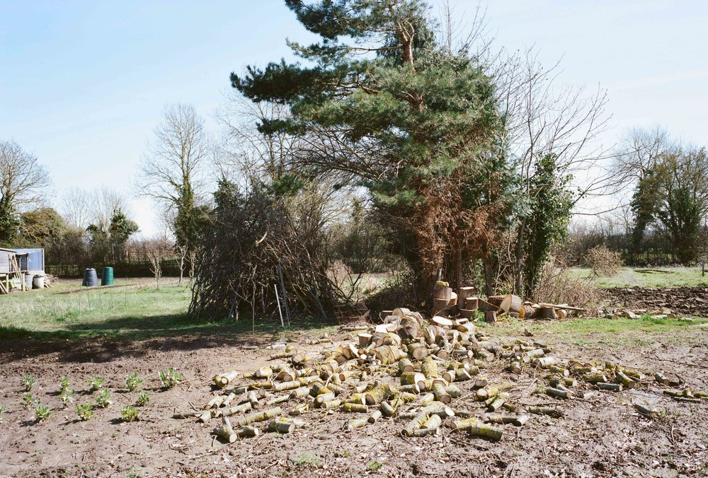 allotment6x9lowres (4 of 8).jpg